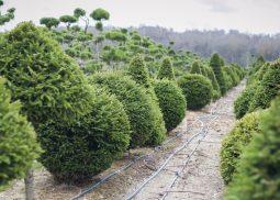 topiary-iz-eli